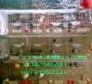 供应鸽子笼 兔子笼 狐狸笼 鹌鹑笼 鸡笼 宠物笼 Play笼具